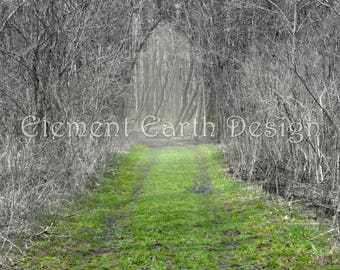 Path in the Woods, Instant Download, 11x14, Digital Printable, Fine Art Digital Photo, Photography, landscape