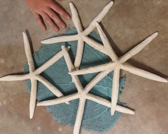 """Extra Large MAMMOTH Size Coastal Home Decor XLarge 10-12"""" 12-14"""" White Finger Star Fish loose for decorating or crafts Sea Shells Supplies"""
