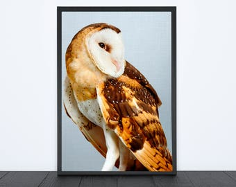 50%OFF,  Owl Poster Print Digital Owl Wall Art Printable Owl Nursery Art Owl Decor Owl Printable Poster Bird Print