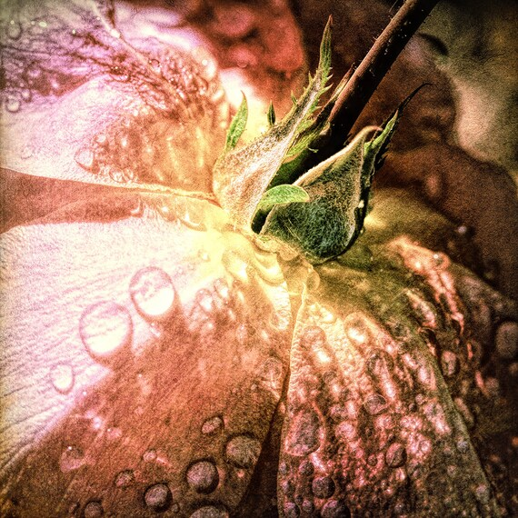 "Metal Art Print ""Romance V"", Flower Photography Printed on Aluminum with Flush Frame, Various Sizes, SPECIAL ORDER ONLY"