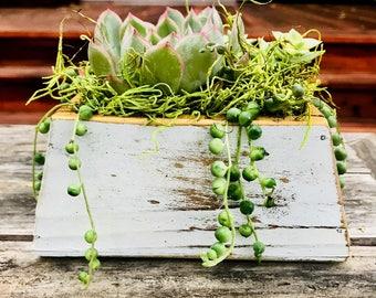 Succulent Arrangement in Whitewashed Wood Planter