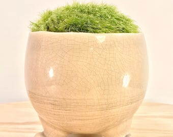 Footed Moss Garden- Care Free