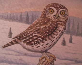 Pigmy Owl In The Boreal Zone, 2015, Original Watercolour Painting, Richard Hull Fine Art