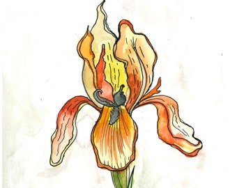 "Original Orange Iris Watercolor Painting 9"" x 12"""