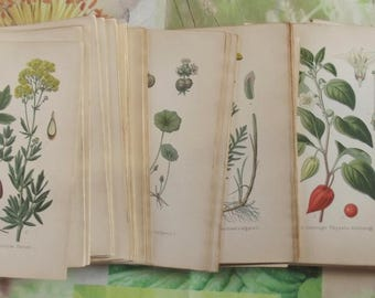 Wholesale lot original edition botanical over 240 etching Board paper designed by Gaston Bonnier 1893 Fritilaire Neottie Valley may