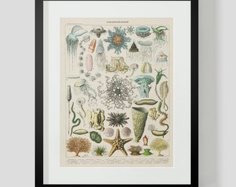 Vintage French Ocean Life Print