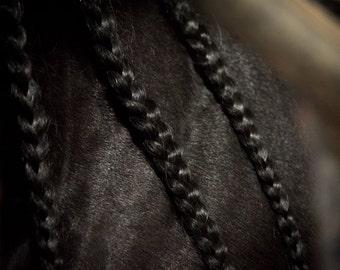 Black Braids, 3Butterflies Photography, black braids, horse braids, black horse, stallion, black stallion