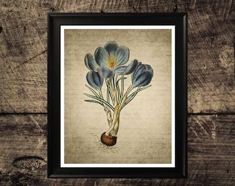 Blue flower print, vintage flower decor, vintage botanical wall art,  floral print