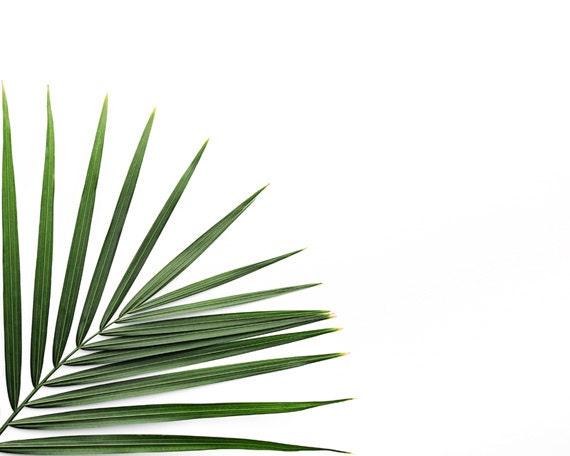 Plant photo tropical print minimalist art palm leaf print
