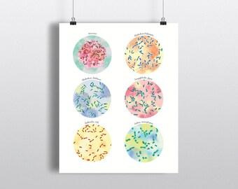 Foodborne Pathogens Poster, Science Art, print, wall decor, 5 x 7 inch, 8 x 10 inch, 11 x 14 inch, Microbiology, molecular biology