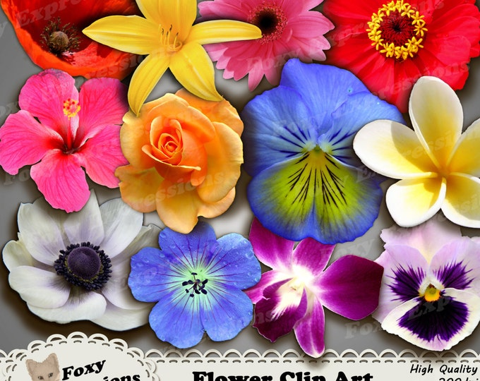 Flower Clip Art pack comes with 12 flowers in shades of red, yellow, pink, purple, blue and white. Added shadowing to give depth & layering.