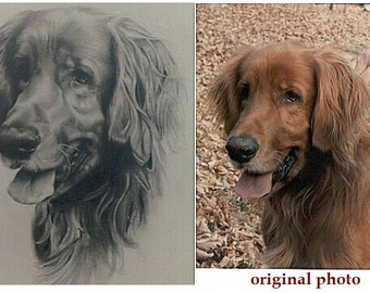 Realistic pencil drawing of your pet