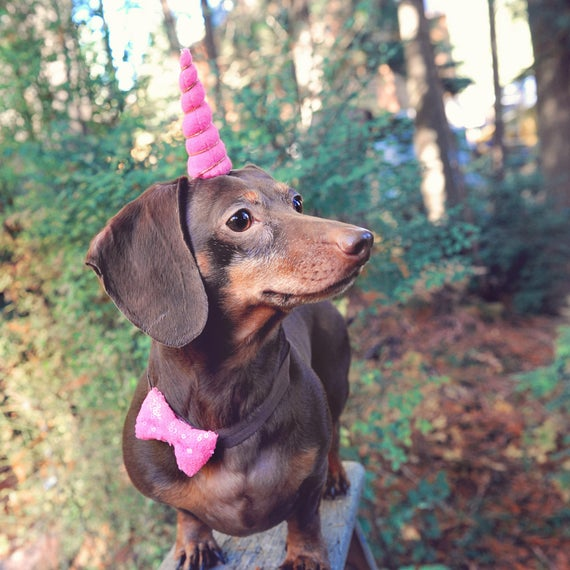 Unicorn Headband for Dog || Pet Unicorn Costume || Dog Unicorn || Unicorn Dog