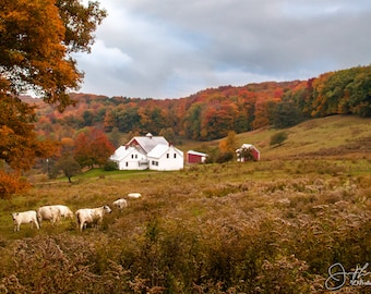 Classic Vermont Farm in Fall Print