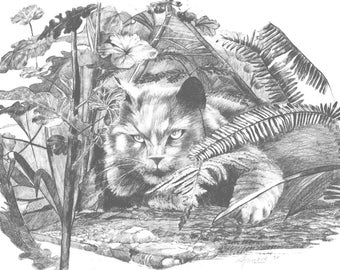 Cat in the grass - Lithographs of original pencil wildlife drawings