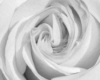 Unfolding Rose