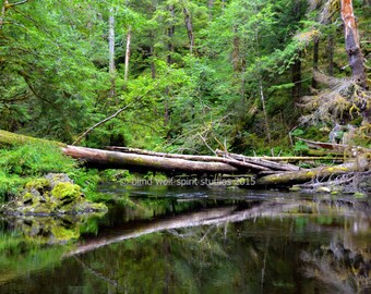 Tongass Rainforest Photo, Alaska, Landscape, Fine Art Photo