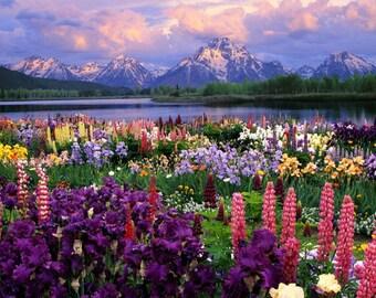 Annual: WILDFLOWER 100+ SEEDS  -17 Different Annuals & Perennials FRESH, High Quality,High Germination