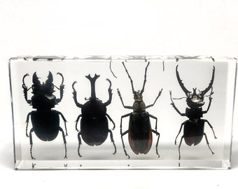 4 Beetles Collection in Lucite