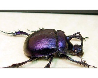 Dad's & Grad's Gift For Men Best Seller For 12 Years Our Real Ancient Beetle Scarab 2274