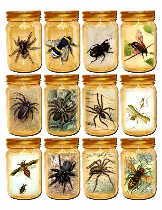 "Ships Free 1x 11""x8 1/2"" Glossy Photo Print Tarantula Insects Bee Beetle Wasp In Jars Perfect For Your Bug / Spider Room Scrapbook Art"