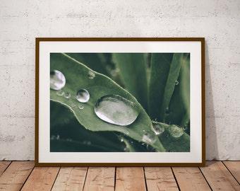 Green Plant Print, Plant Photography, Digital Art, Green Leaf, Nature Wall Art Print, Plant Wall Art, Exotic leaf, Botanical Plant Poster