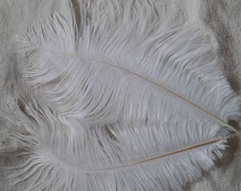 set of 2 white ostrich feathers