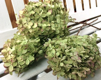 DRIED Hydrangea Flowers  3 Lovely small green flowers with pink tinge flower heads on stems for Prim flowers Wedding flowers Shabby floral