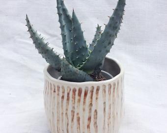 Ceramic Planter Stripes - Handformed - Mini Planter - Succulent or Cactus Planter - Handmade Pottery - Ready To Ship