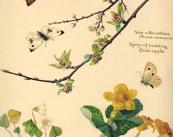 Antique Print, English Flowers Butterflies 42 Edwardian chart beautiful wall art vintage color lithograph illustration 1970 butterfly garden
