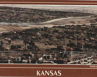 Vintage 1980s Postcard Kansas Beef Feedyard Farm Cows Rural Agriculture Farming Industrial Photochrome Era Postally Unused