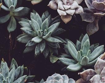 Succulent Plant Minimalist Photography Print