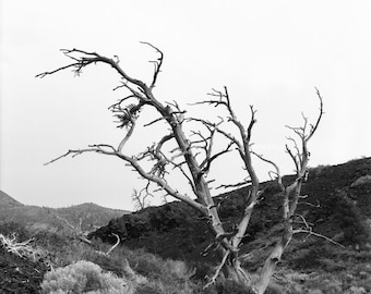 Craters of the Moon National Monument- Original Photograph