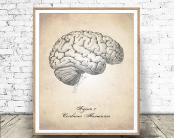 Human Brain Art Print, Digital Download, Human Brain Print, Human Anatomy, Human Brain Printable, Brain Print, Human Anatomy Download, Brain