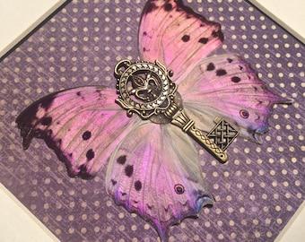 Real framed butterflies, butterfly shadowbox, mounted butterflies, butterfly display, Real Butterfly Art, Pinned Butterfly, purple butterfly