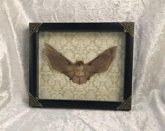 Framed Bat - Light Green Damask