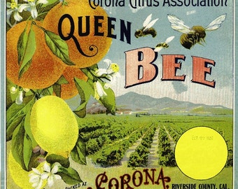 Corona Queen Bee 2 Orange Citrus Fruit Crate Box Label Art Print