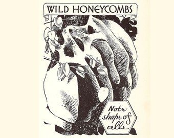 Wild Honeycombs .. 1933 Antique Book Illustration