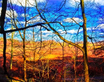 Late Fall in Longwood Gardens of Pennsylvania Photography Print