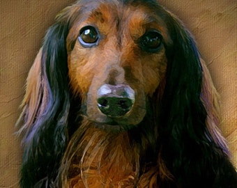 Custom Dog Portrait. Long Hair Dachshund. Hand Painted. 8 x 8 inches. Stretched Canvas.