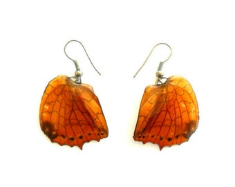Real Butterfly Wings Earrings Handmade Jewelry Gift / Brown / Natural Jewelry Earring