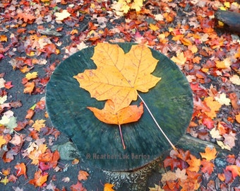 Canada Photography - Maple Leaf - Toronto - Autumn Wall Decor - Canadian Fine Art Print