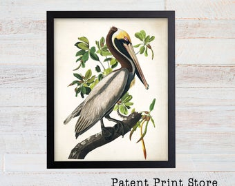 Vintage James Audubon Great Brown Pelican Art Print. Bird Prints. Coastal Wall Art. Audubon Print. Beach House Art. Living Room Art.  39