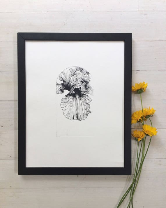 Iris flower, Flower etching, flower illustration, iris flower print, intaglio print, botanical art print, botanical illustration, Iris print