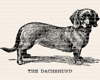 Dog Clip Art - Dachshund Clip Art - Vintage Dachschund Illustration – Dog Digital Stamp - Pet Clip Art - Printable Graphic – commercial use
