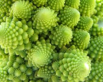 Broccoli Romanesco Seeds Heirloom Garden Italian Favorite 25 Seeds