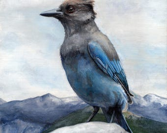 Steller's Jay - original acrylic painting on board - small tiny bird art SFA