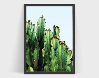 Cactus photo, Botanical prints, Cactus print, Succulent Print, Desert Photography, Cactus wall art, Desert print, California print, Bohemian