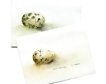 Two Original Hand Painted Art Cards - Arctic Tern and Laughing Gull Eggs
