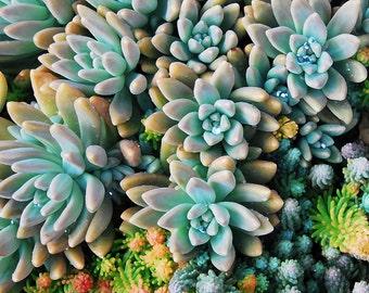 Rustic Decor Photographs, Succulent Photography, Fine Art Photography, Mixed Succulents- Modern Wall Art